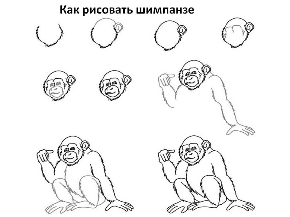 Как рисовать шимпанзе