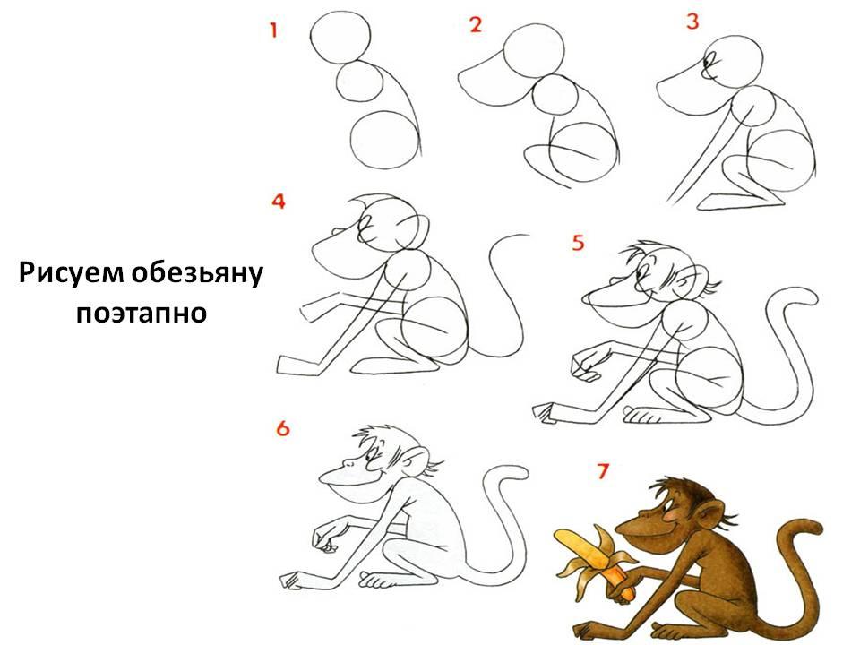 Рисуем обезьяну поэтапно