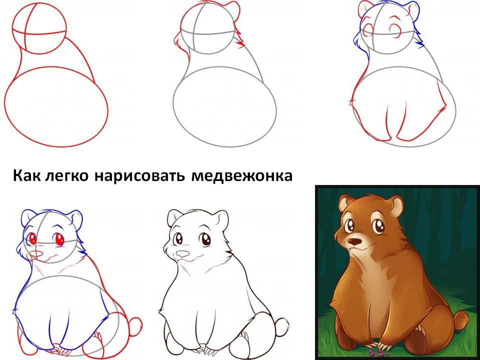 Как легко нарисовать медвежонка