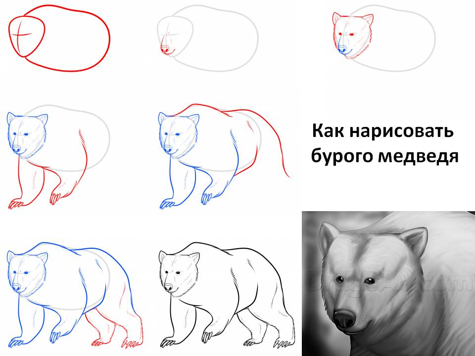 Как раскрасить медведя красками мастер класс