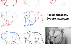 kak-narisovat-medvedya1