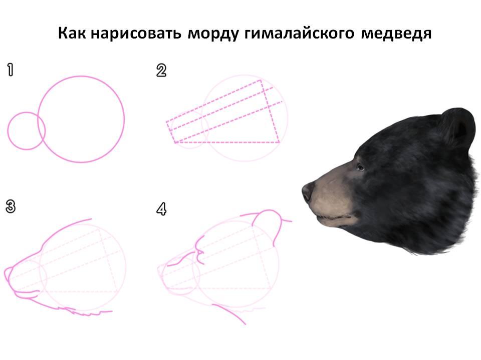 Как нарисовать морду чёрного медведя
