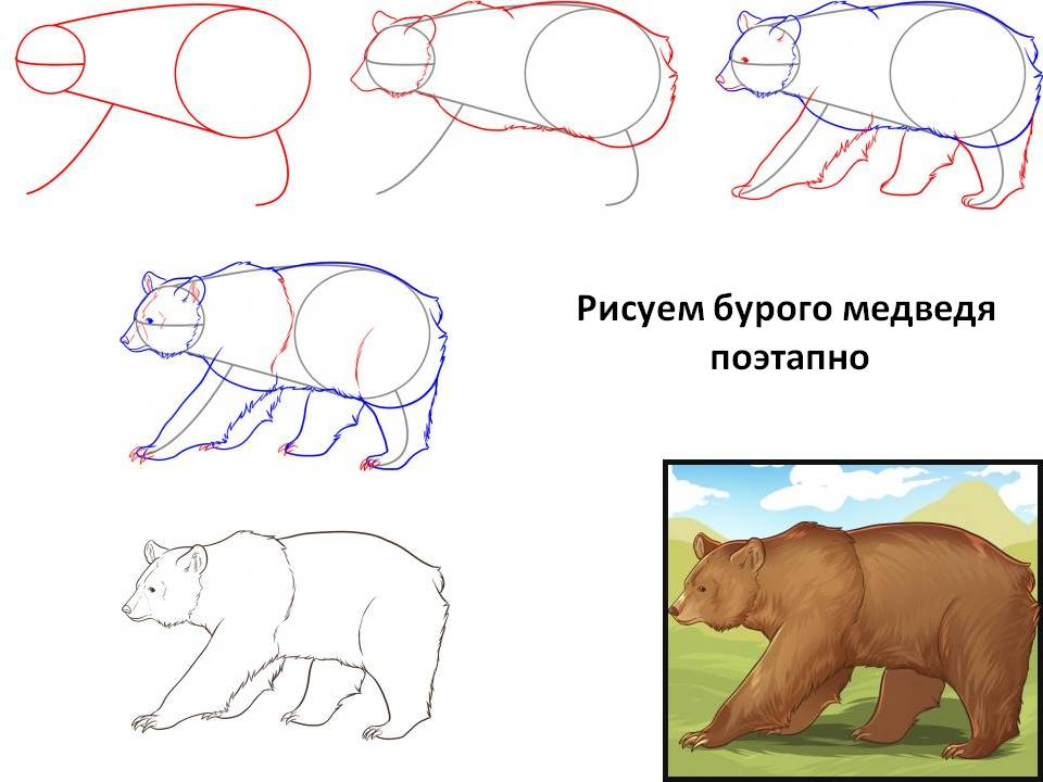 Рисуем бурого медведя поэтапно