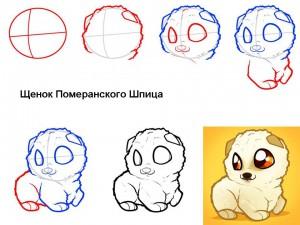 Как нарисовать щенка Шпица