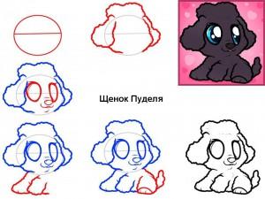 Как нарисовать щенка Пуделя