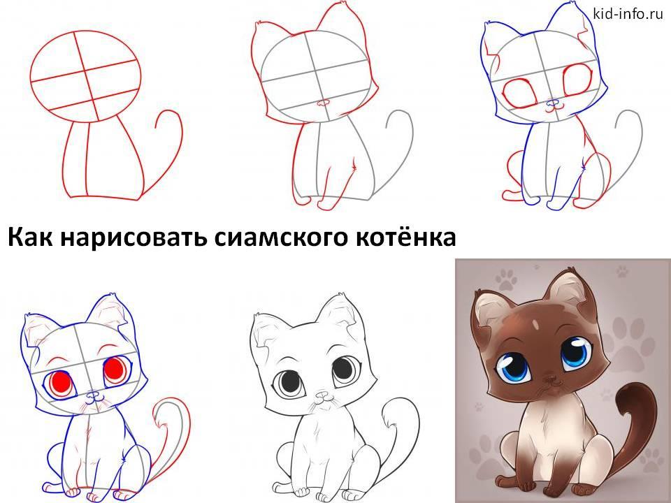 Как нарисовать сиамского котёнк
