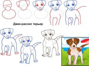 Как нарисовать собаку Джек-рассел