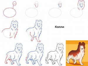 Как нарисовать собаку Колли
