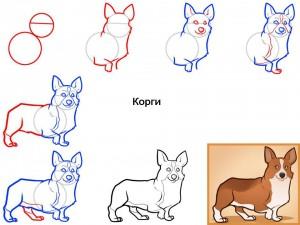 Как нарисовать собаку Корги