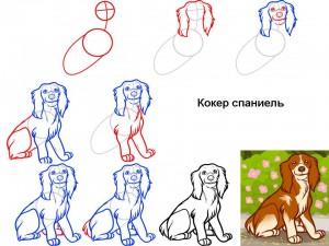 Как нарисовать собаку Спаниель