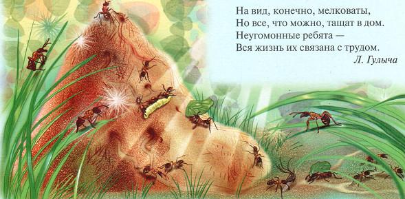 Загадка о муравьях