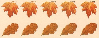 """Развивающая игра """"Считаем листья"""""""