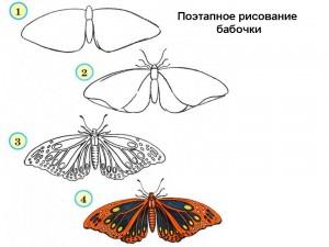 Поэтапное рисование бабочки