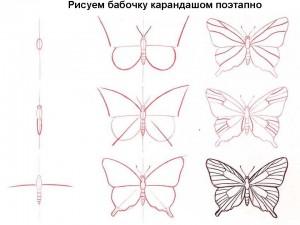 Рисуем бабочку карандашом поэтапно