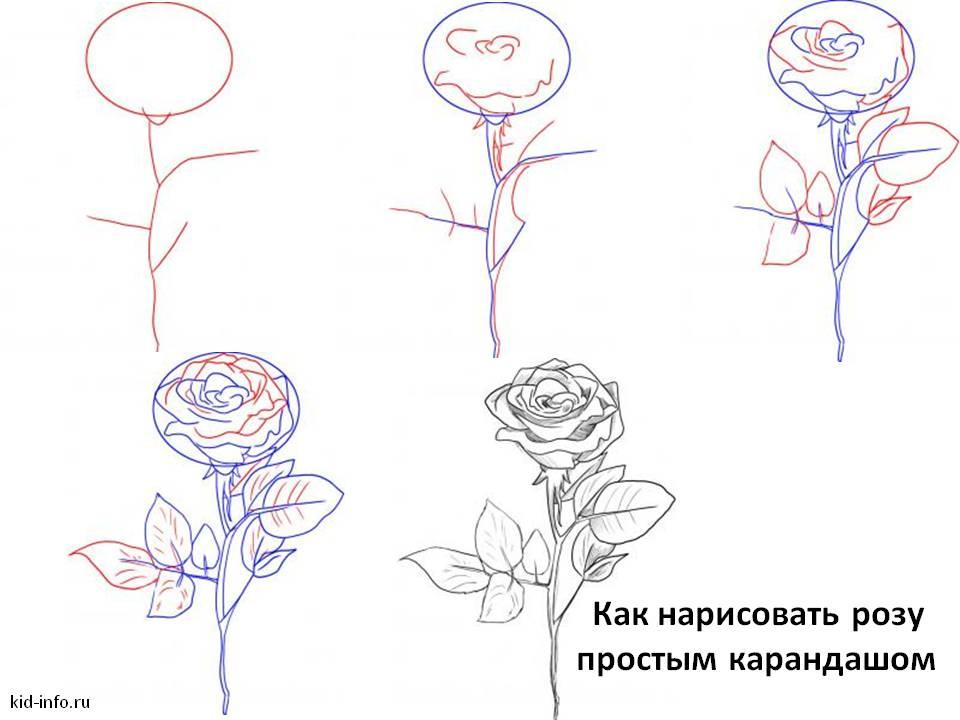 Как нарисовать розу простым карандашом