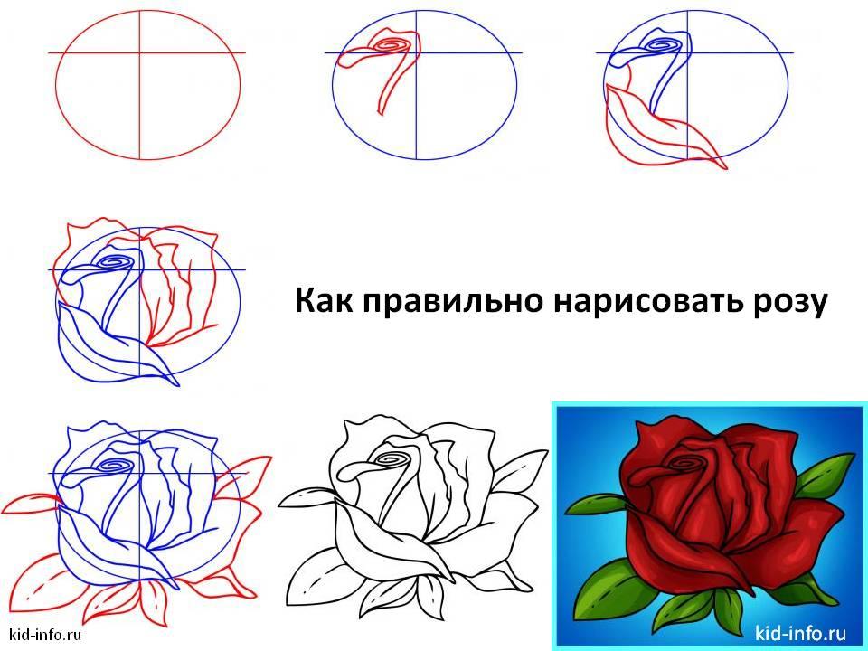 Как правильно нарисовать розу