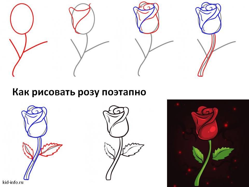 Как рисовать розу поэтапно