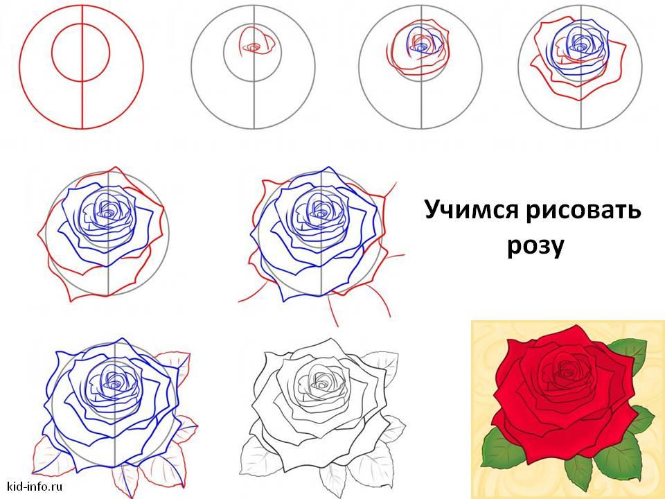 Учимся рисовать розу