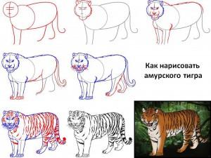 Как нарисовать амурского тигра