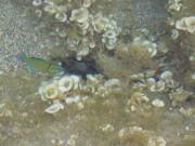 Рыбка в камнях
