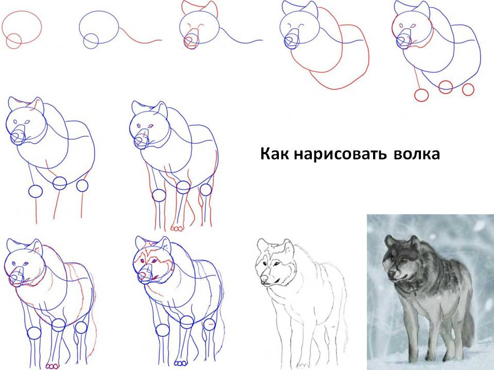 Как нарисовать волкау