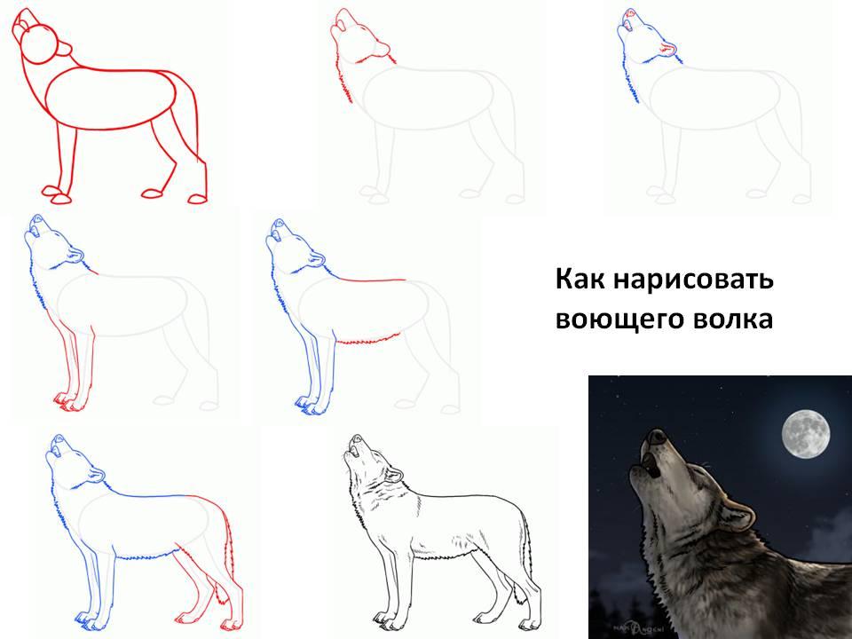 Как нарисовать воющего волка