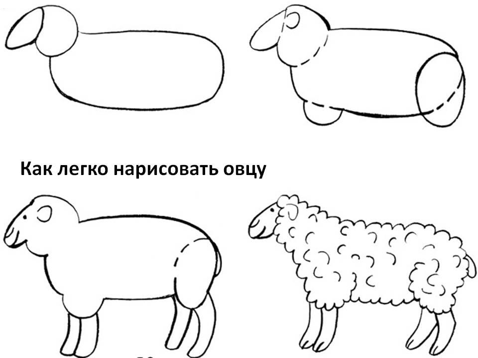 Как легко нарисовать овцу