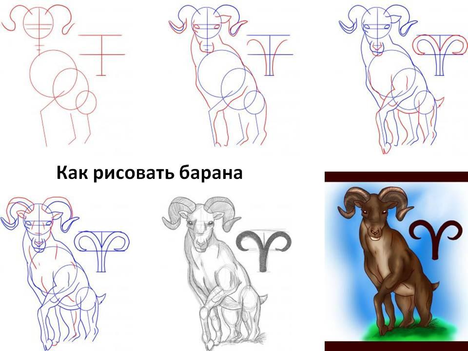 Как рисовать барана (овна)