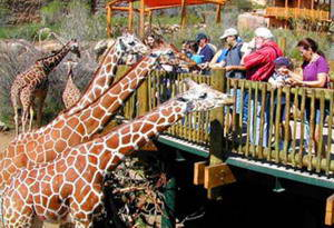 Дубайский зоопарк