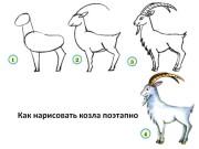 Как нарисовать козла поэтапно