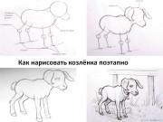 Как нарисовать козлёнка поэтапно