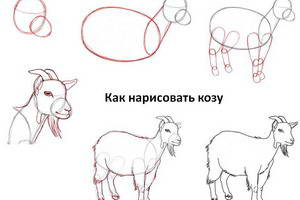Как нарисовать козу, козла и козлёнка