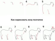 Как нарисовать козу поэтапно