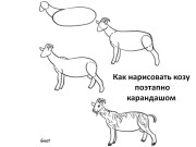 Как нарисовать козу поэтапно карандашом