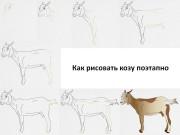 Как рисовать козу поэтапно