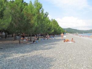 Пляж в сосновом бору Пицунды