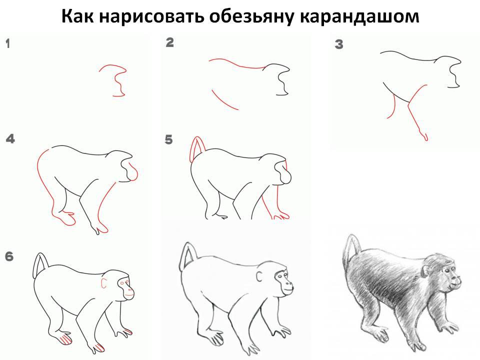 Как нарисовать обезьяну карандашом