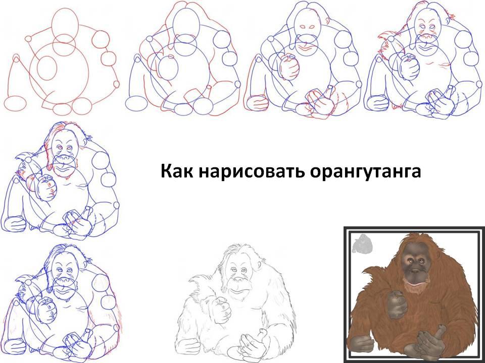 Как нарисовать орангутанга