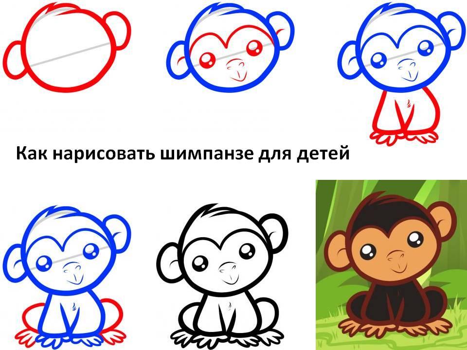 Как нарисовать шимпанзе для детей