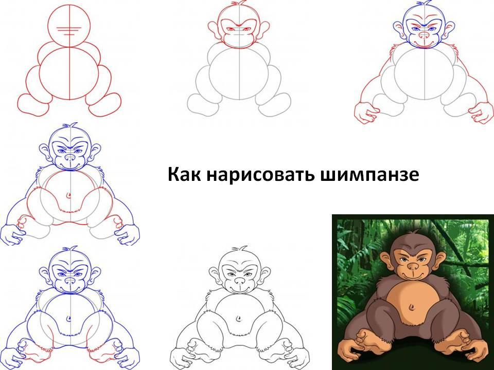 Как нарисовать шимпанзе