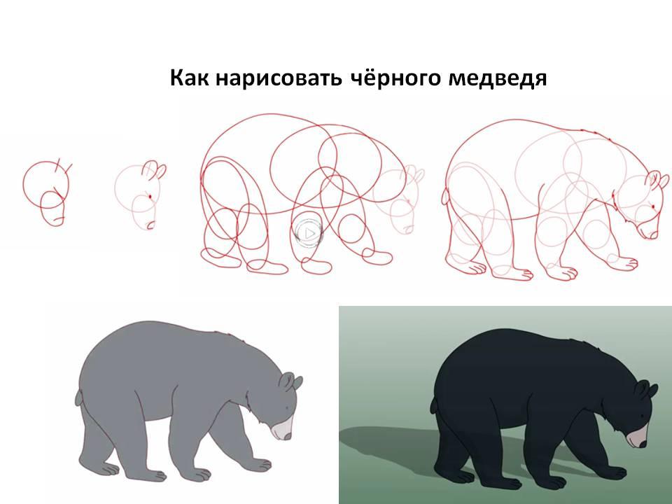 Как нарисовать чёрного медведя