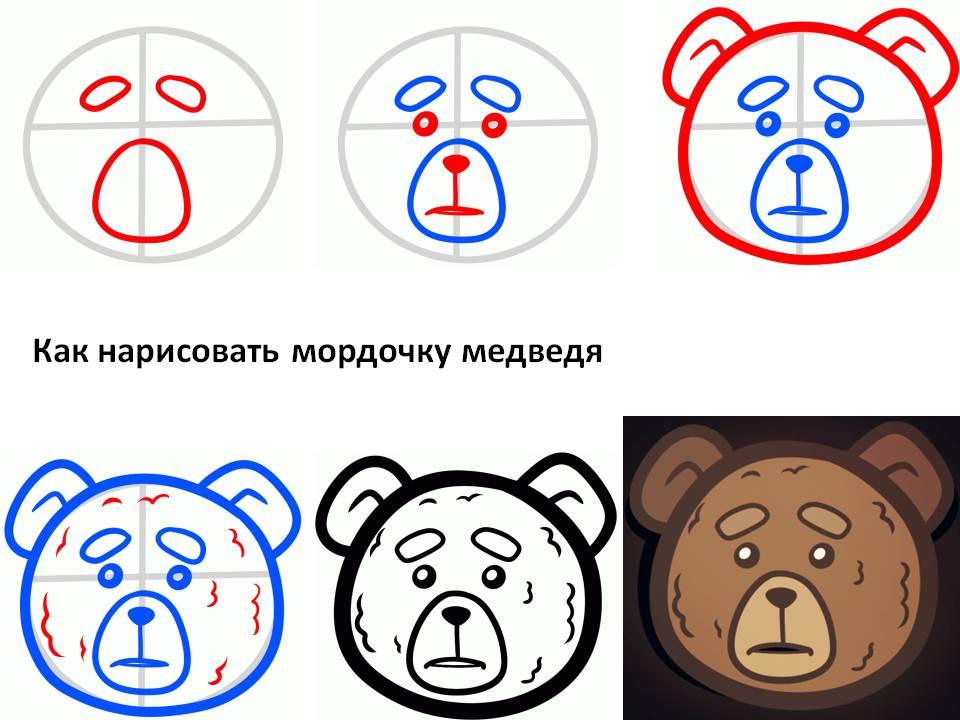 Как нарисовать мордочку доброго медведя