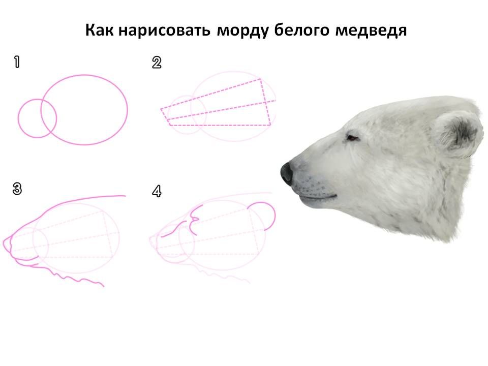 Как нарисовать морду белого медведя