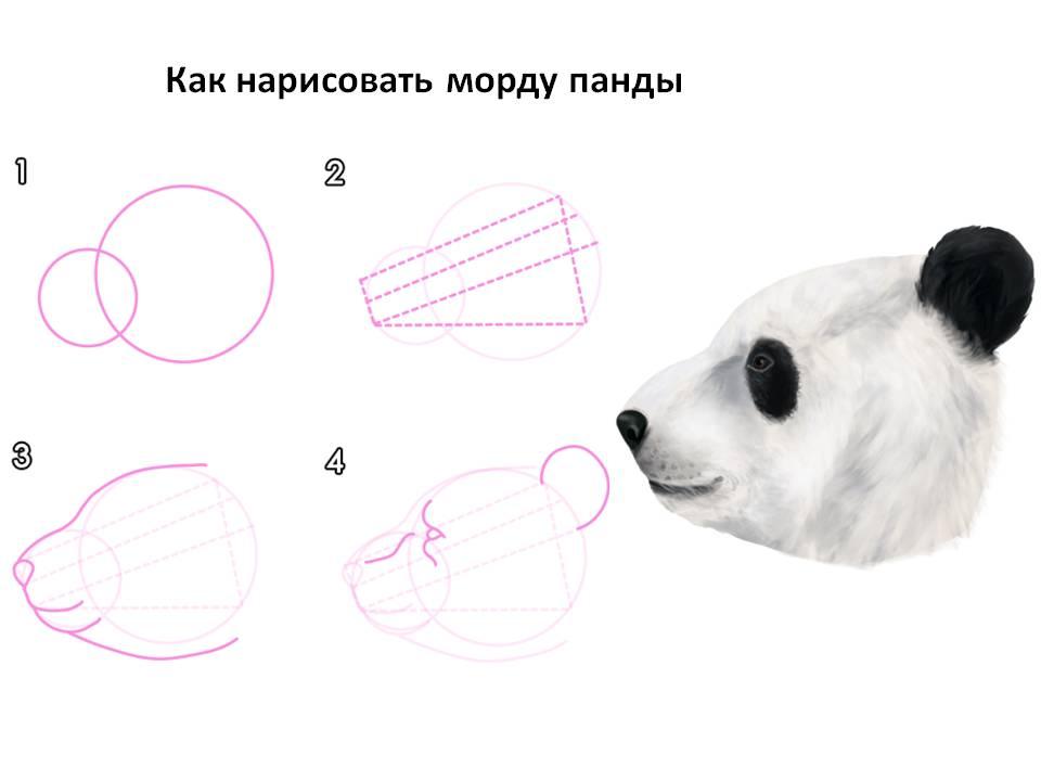 Как нарисовать морду панды