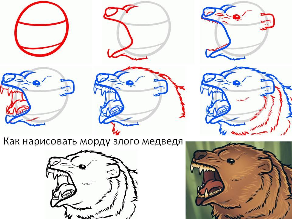 Как нарисовать морду злого медведя