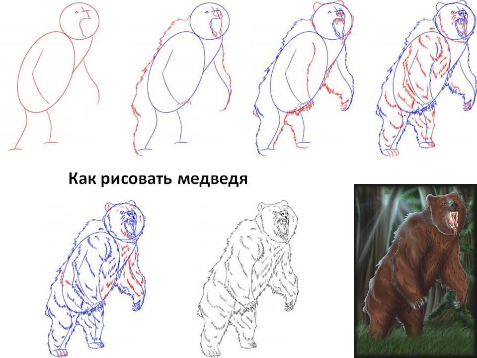 Как рисовать медведя
