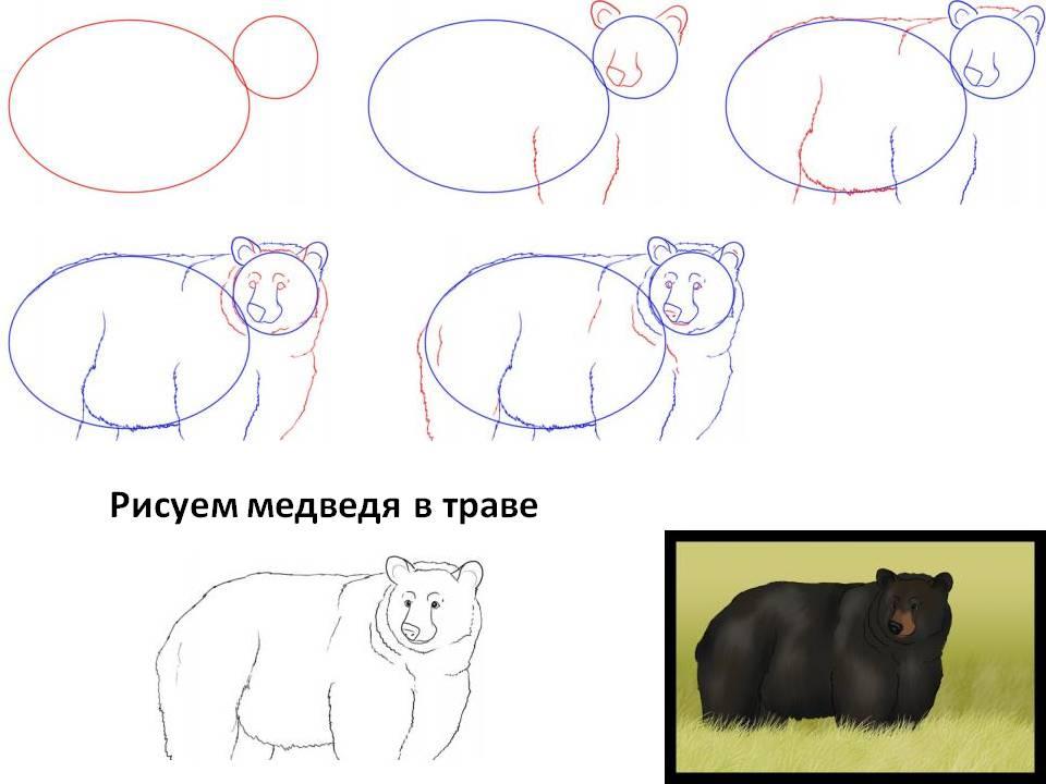 Рисуем бурого медведя в траве